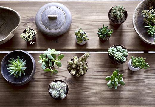 201801-plantes-pot-succulent-ikea